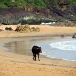 Zwischen Strand und Stau – Teil II: Norden